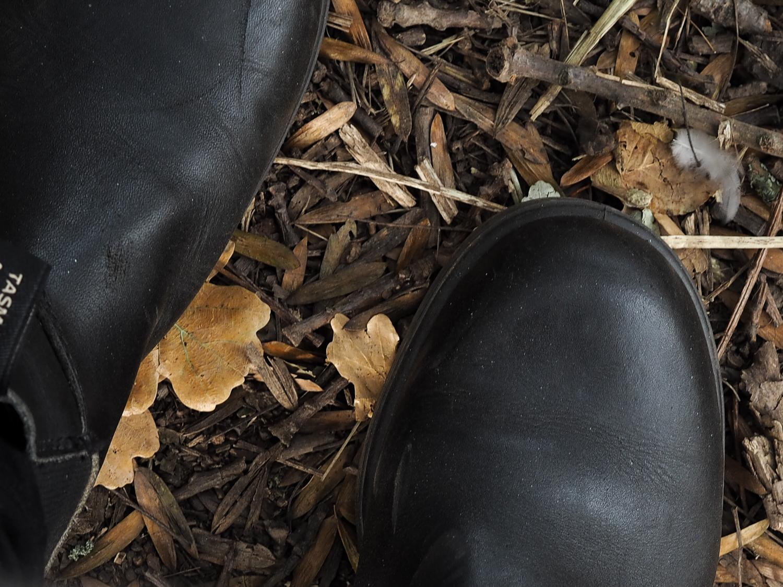 Autumn leaves | Design  Hunter