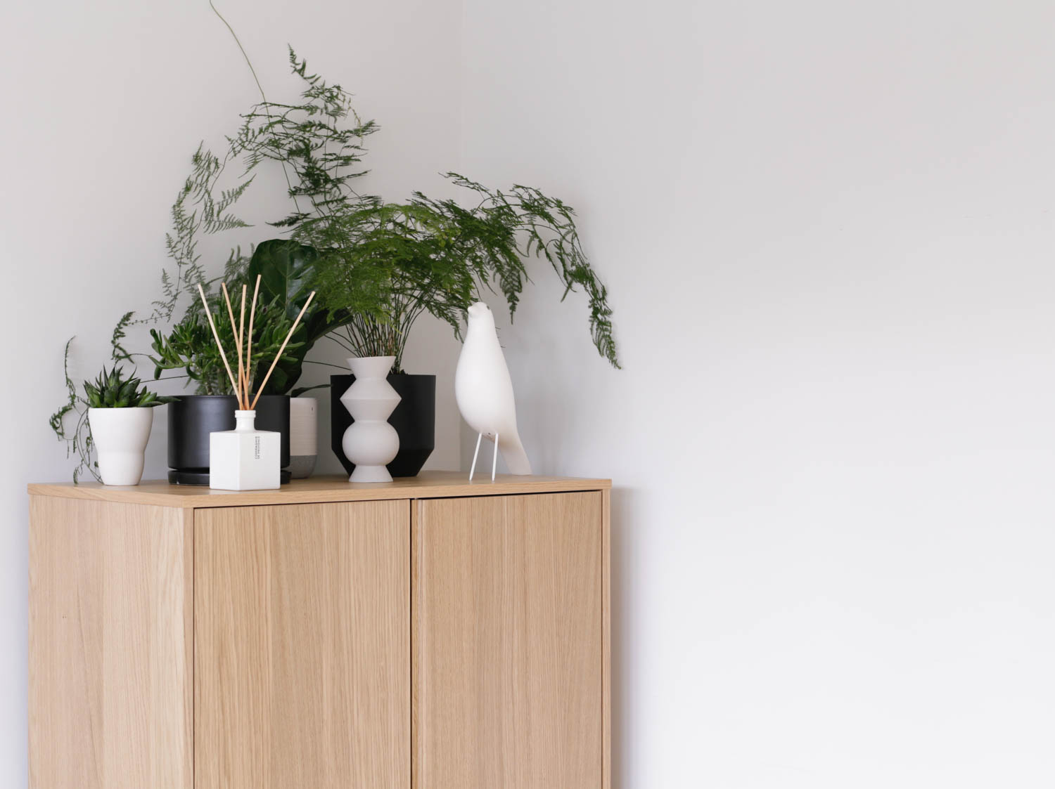 Plants in home office