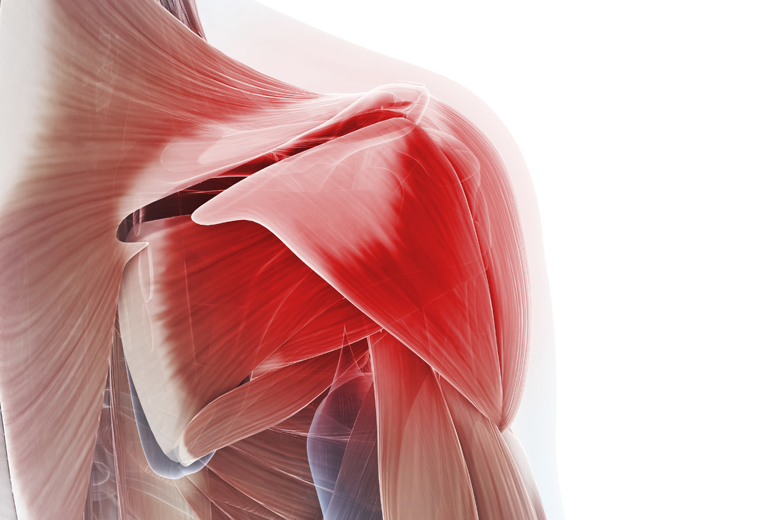 We can help restore shoulder function during this painful condition, also called  Adhesive Capsulitis .