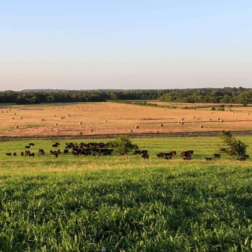 A Bar N Ranch   A Bar N Ranch, located on 4000 beautiful acres in Celina and Sherman, Texas, is dedicated to producing the best Wagyu cattle in Northern Texas. A Bar N Ranch cattle gets only the best treatment - pasture raised, grain finished and never treated with growth hormones.