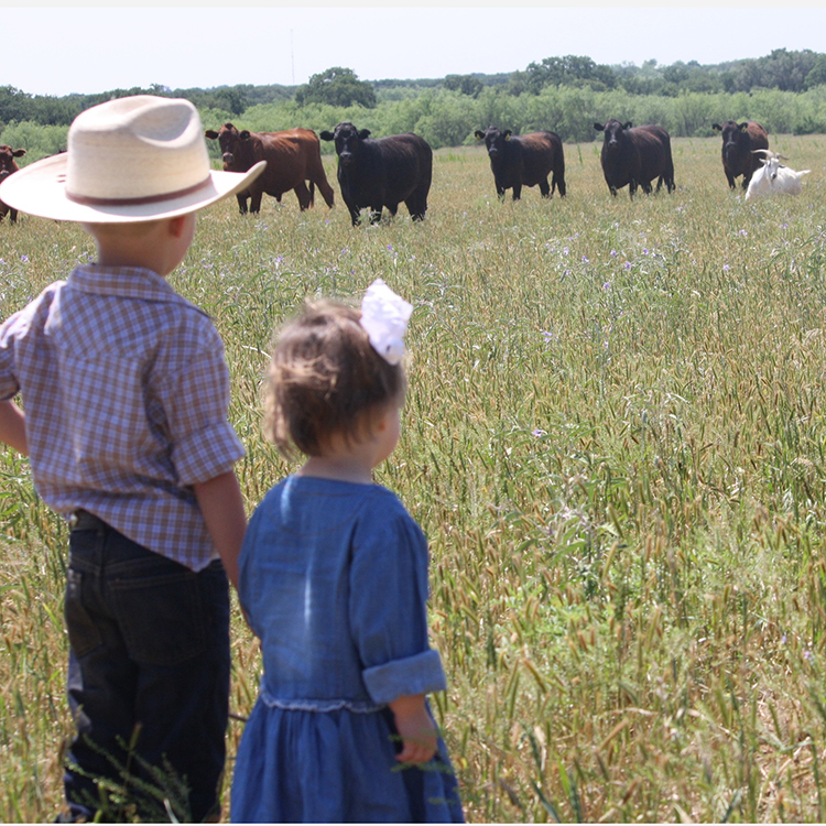 2S Ranch   The family owned and operated 2S Ranch produces black angus bulls and cross-bred heifers that eat grass in open pastures daily and are never given hormones, corn, grains, or steroids. All beef is grass-fed, grass-finished, USDA certified, and aged for at least 10-14 days.