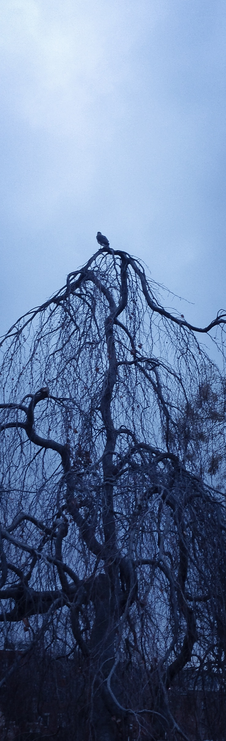Topiary Park, January 11, 2014