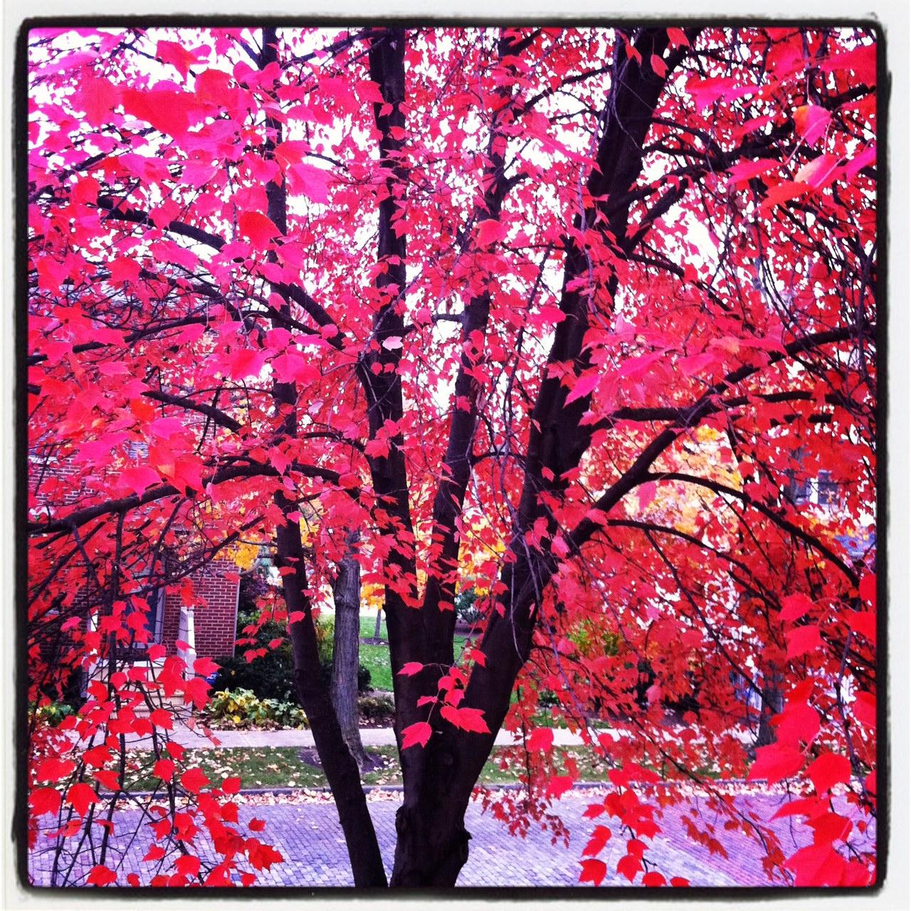 tree-2011.11.03.JPG