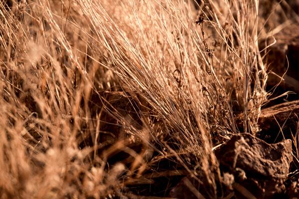 adage_SW_grass1.jpg