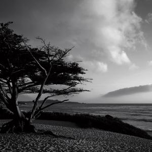 PACIFIC COAST - A mild coastal fragrance of crushed lime leaves, sagebrush, light marine brine and pale musk.