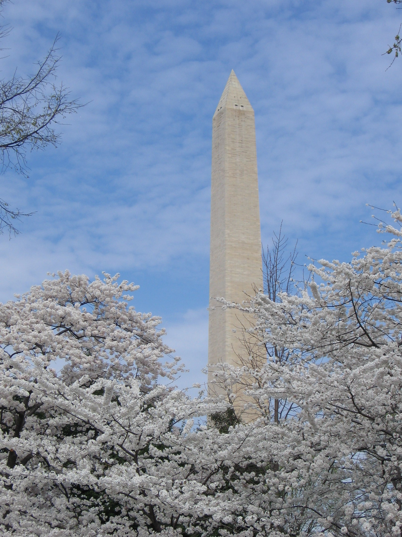 Cherry-Blossoms-National-Monument