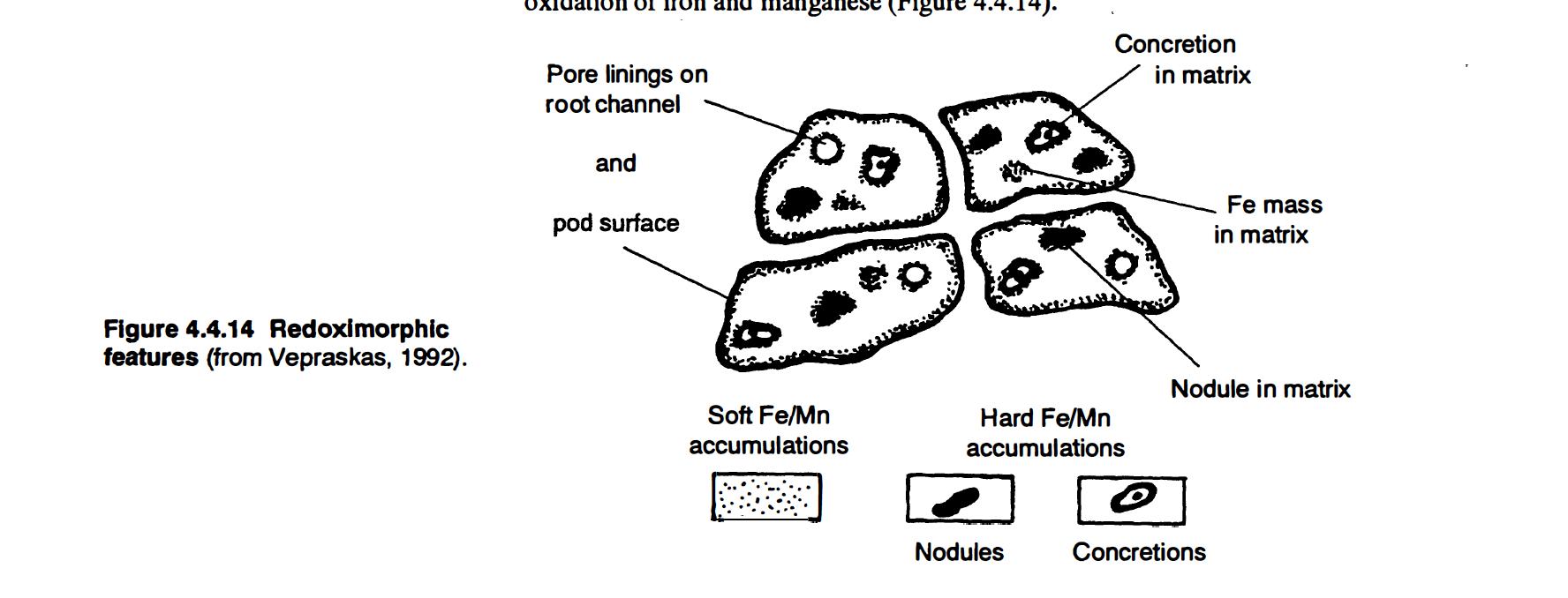 Redoximorphic Features