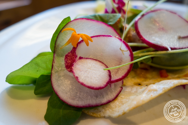 Fish tacos at The Harold in NYC, New York