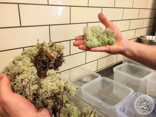 Moss at Noma in Copenhagen, Denmark