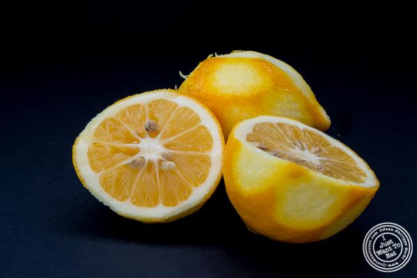 Recipe: Olive Oil Cake - Meyer lemon