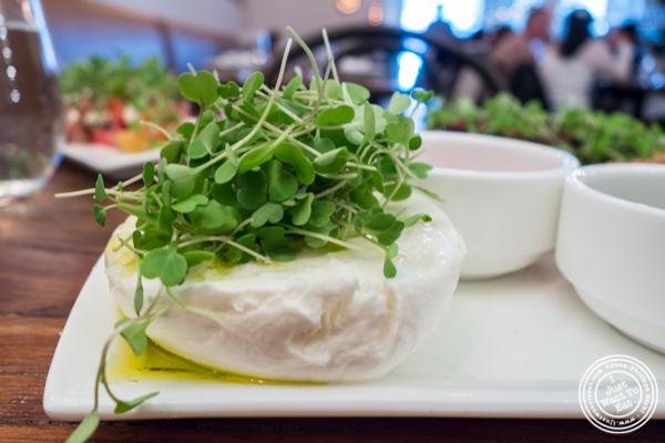 Mozzarella di Buffala at Gran Morsi, Italian restaurant in TriBeCa, NYC