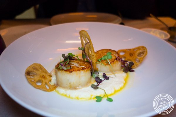 Scallops at Robert in The Museum of Art and Design, NYC, NY
