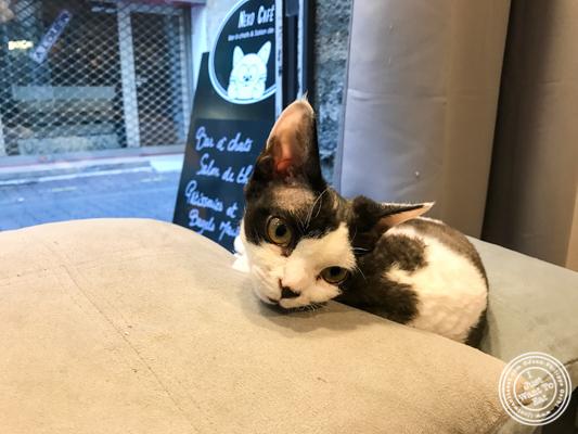 Marguerite at Neko Cafe in Grenoble, France