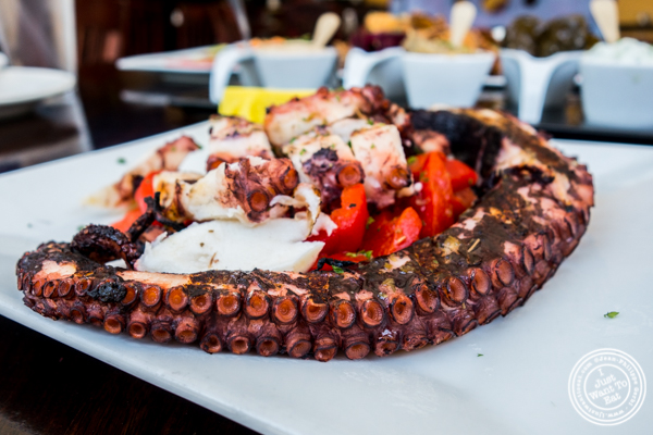 Octopus at Greek Town in Hoboken, NJ