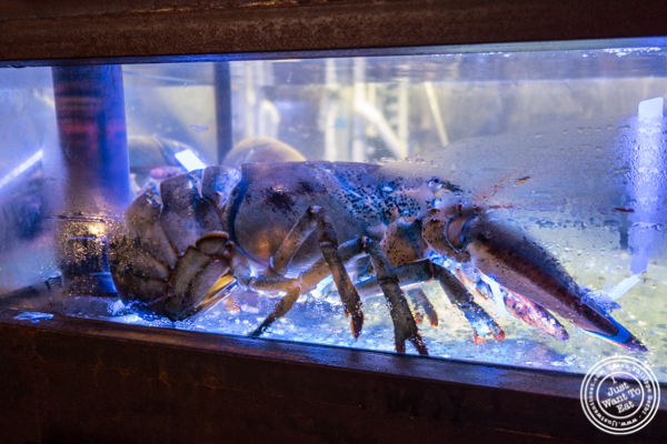 Fish tanks at Burger and Lobster in Times Square
