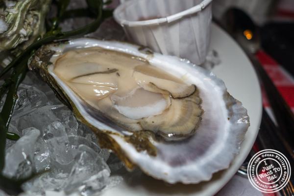 Totten Virginica oyster