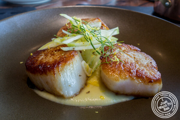 Seared scallops at Lokal in Jersey City