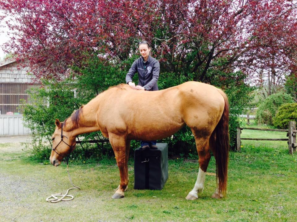 Equine Chiropractic