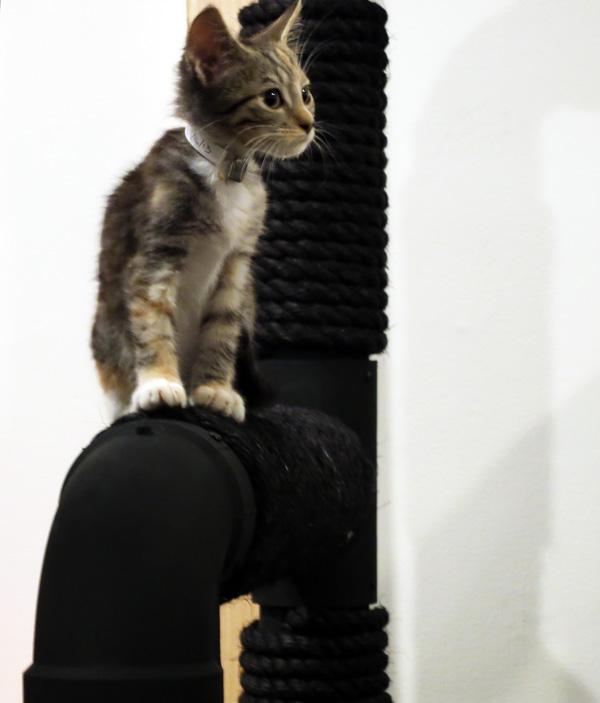 cat-opening-02-web.jpg