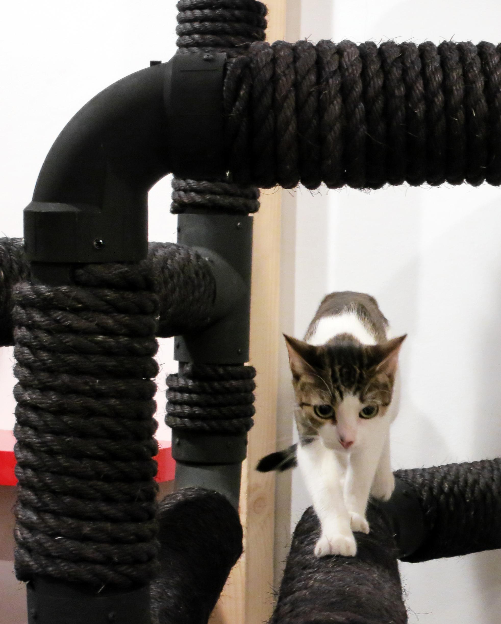 cat-opening-06-fullcrop.jpg