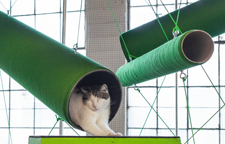 Cat-Website_03.jpg