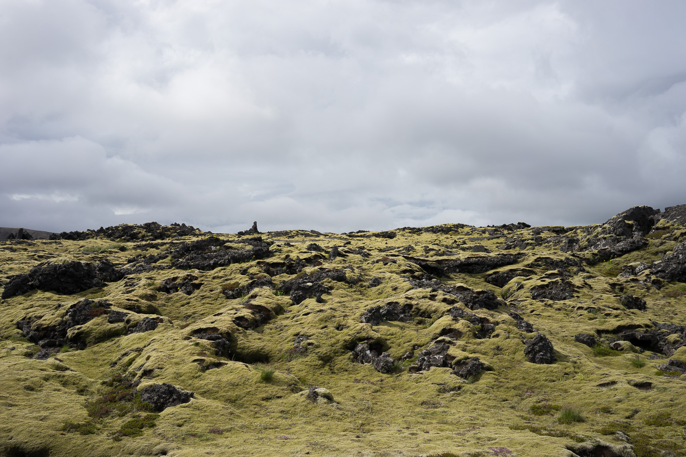 Mossy terrain is everywhere in Iceland.  Photo by   Jonnie Hallman  !