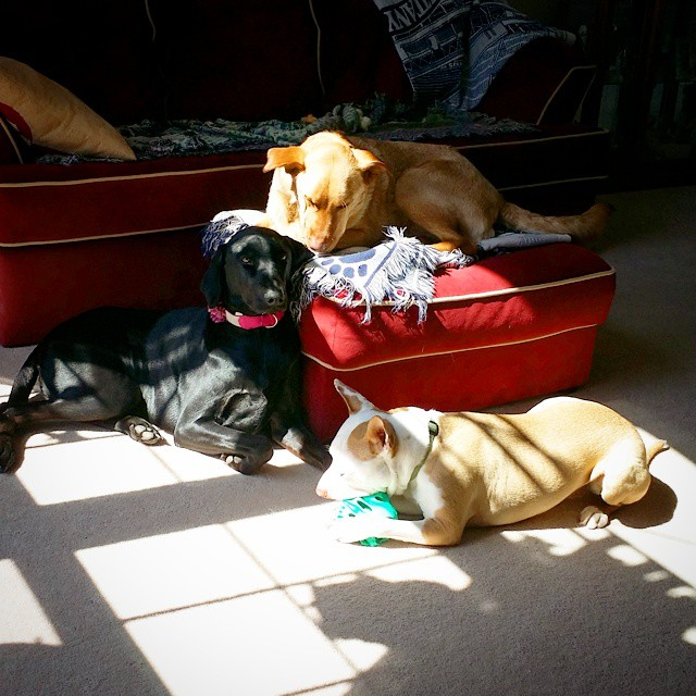 Jack, Libby & Baxter