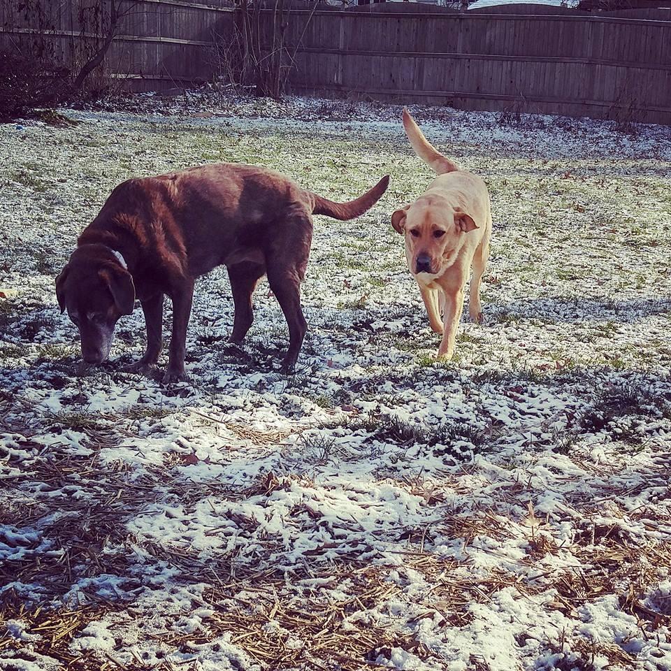 Ruby & Marley
