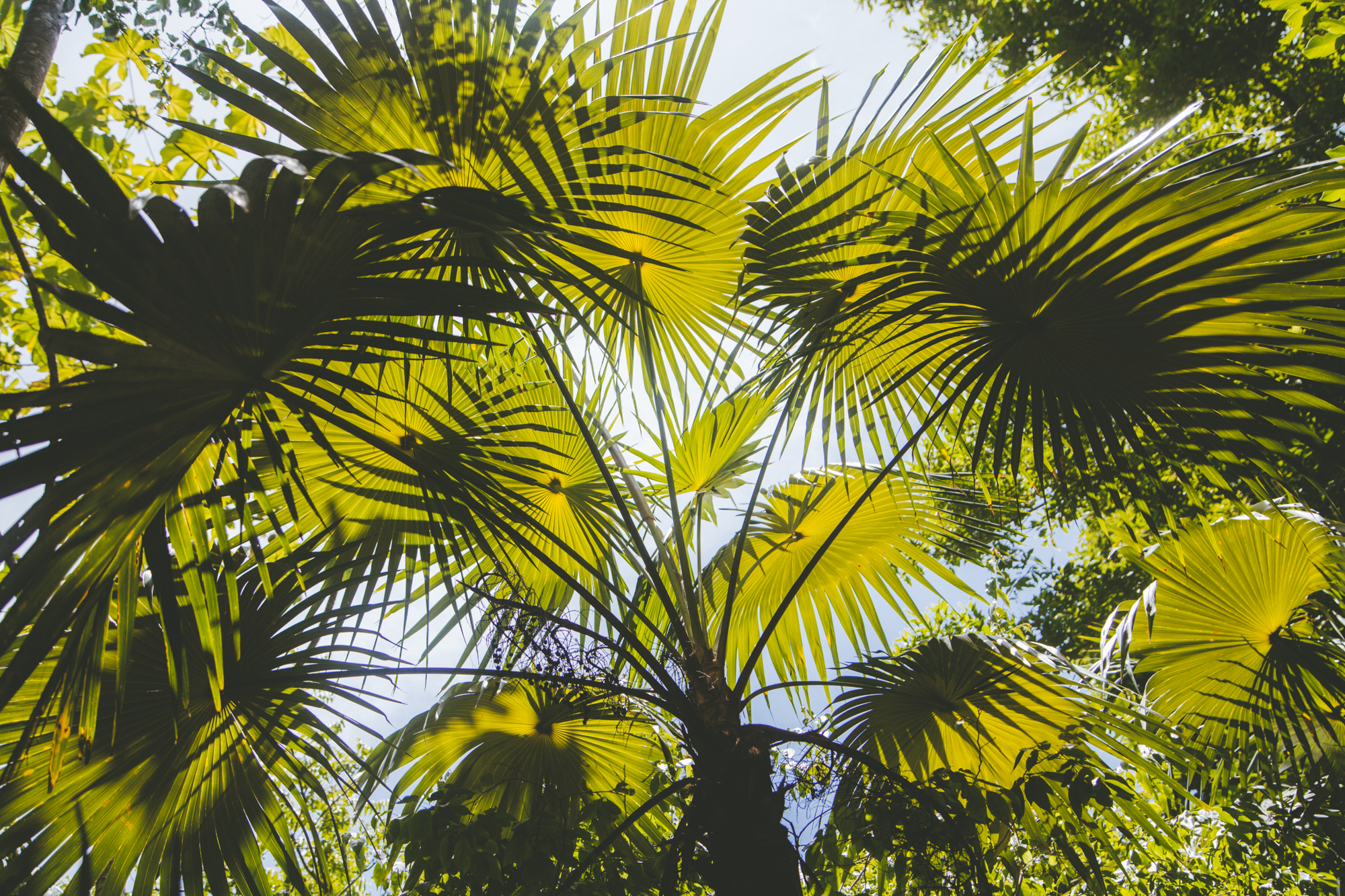 TRINIDAD&TOBAGO_MARIANNA JAMADI-14.jpg