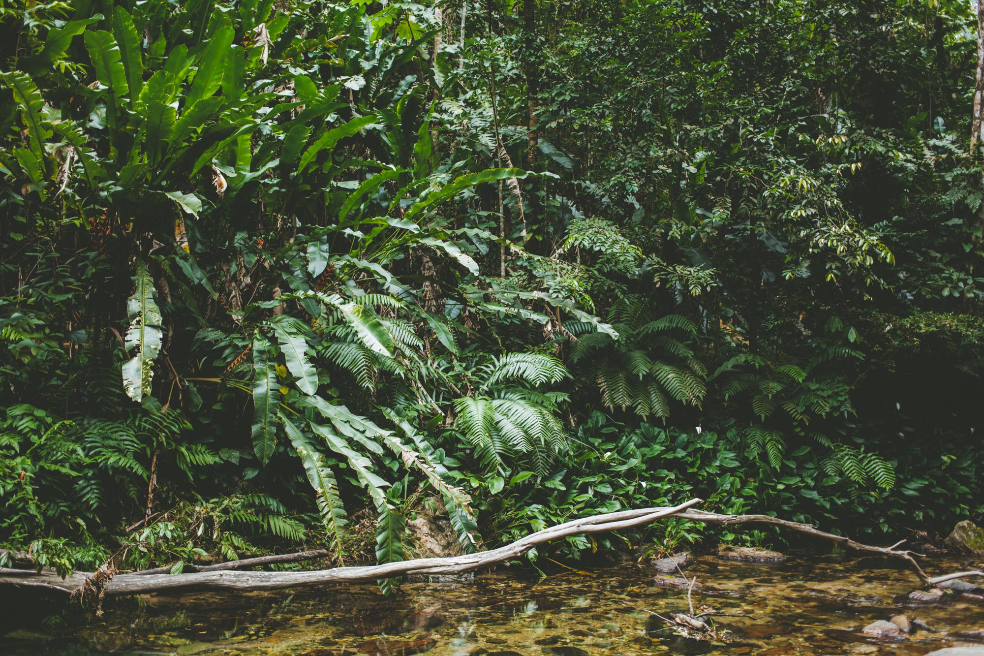 TRINIDAD&TOBAGO_MARIANNA JAMADI-133.jpg