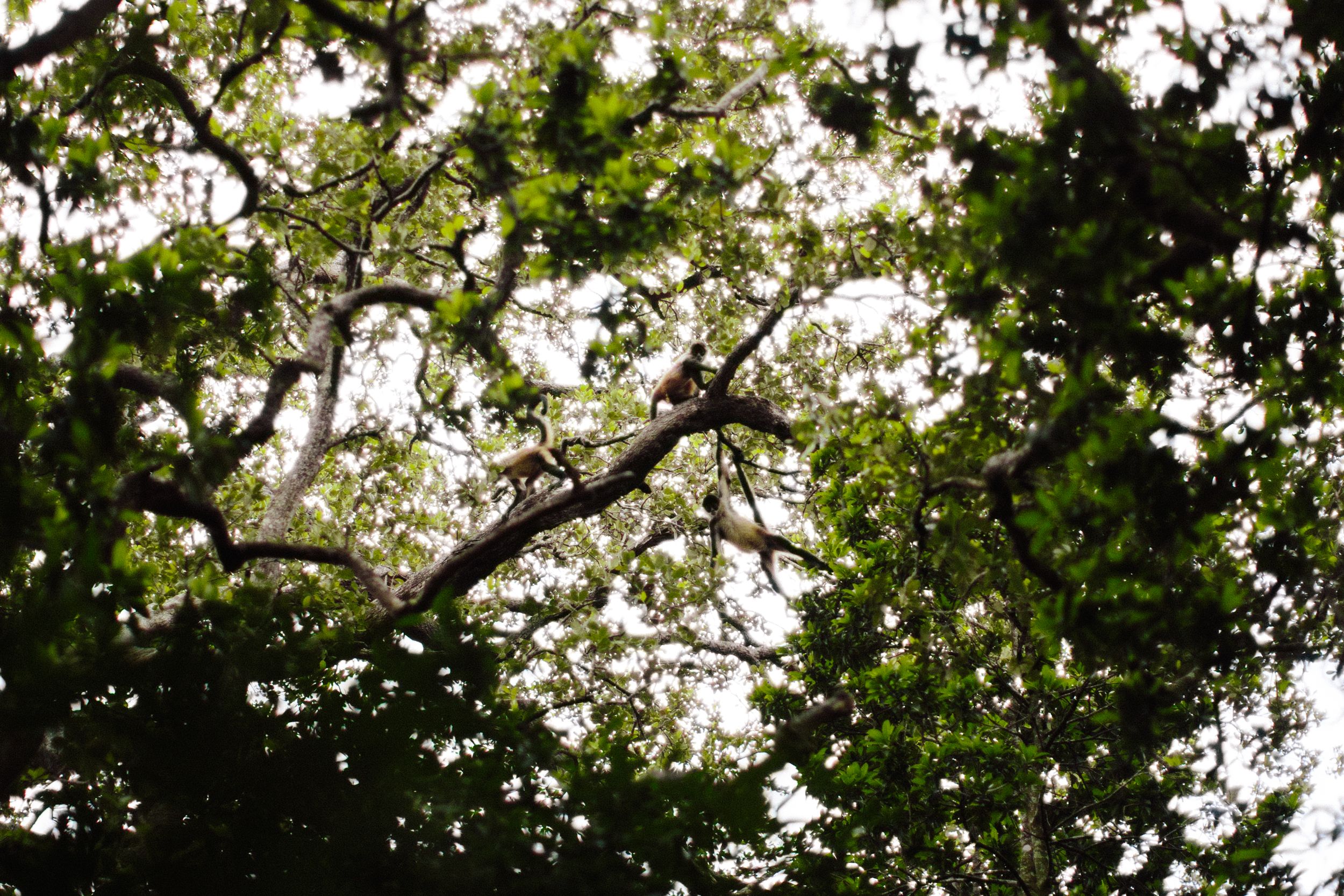 Costa Rica_REI_TAQ-91.jpg