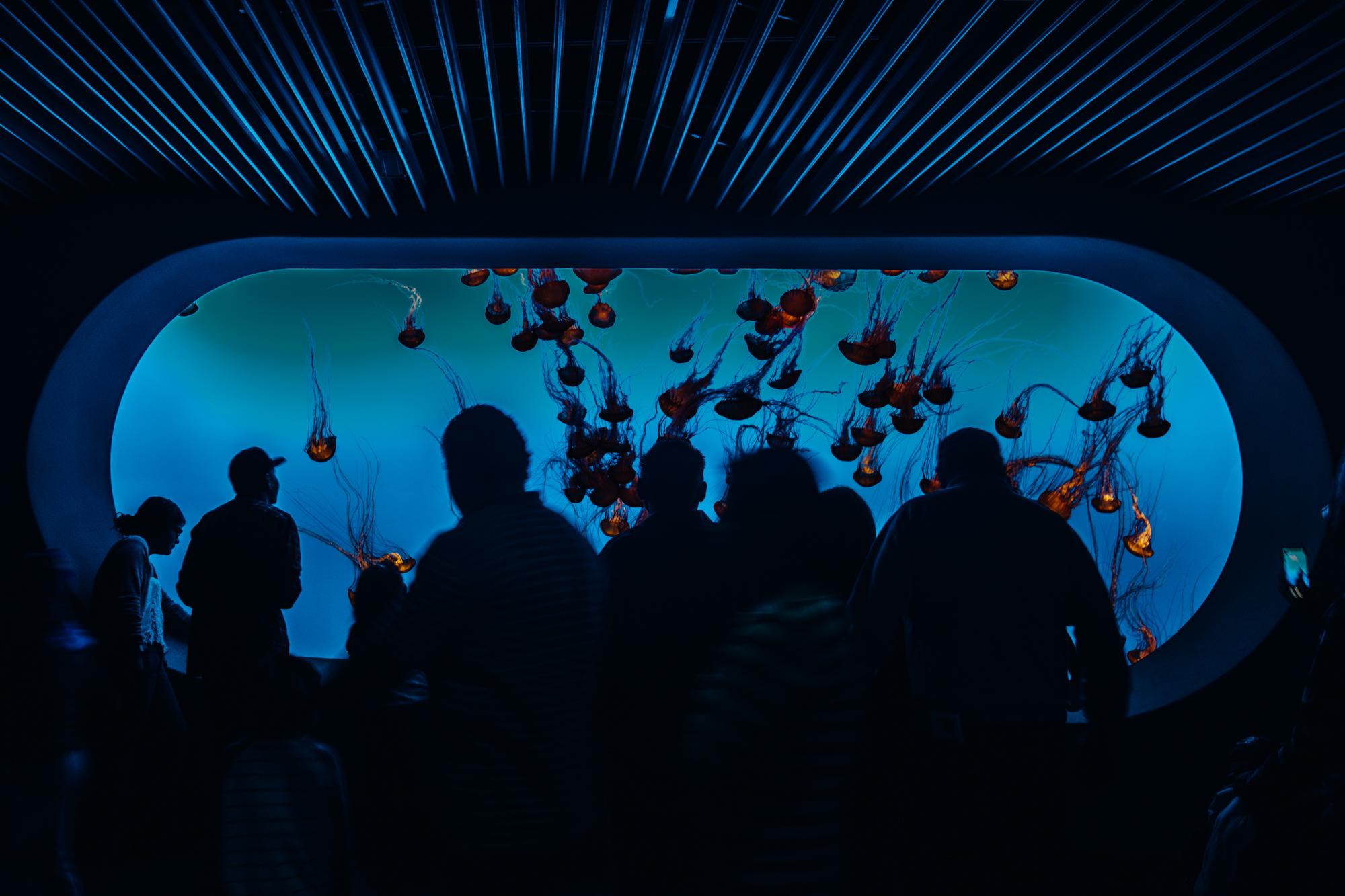MONTEREY_Aquarium-9.jpg