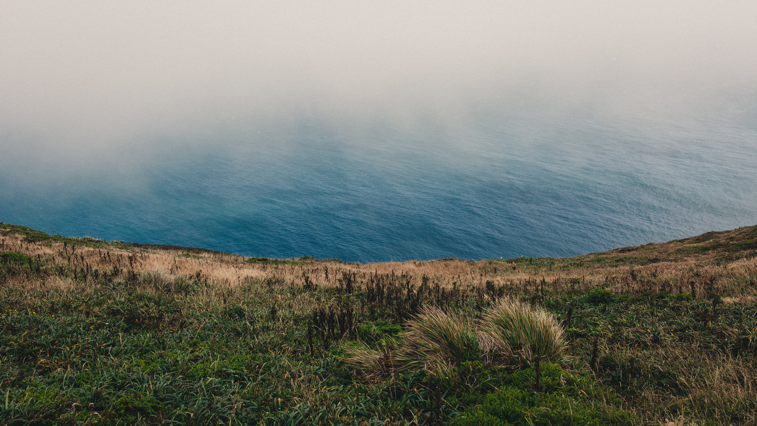 Point Reyes by Andrew Shepherd