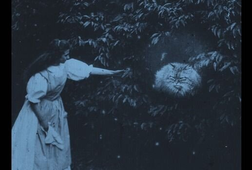 "The ""cheshire cat"" in the 1903 iteration of Alice in Wonderland"