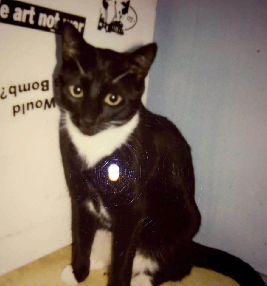 Charlie as a kitten