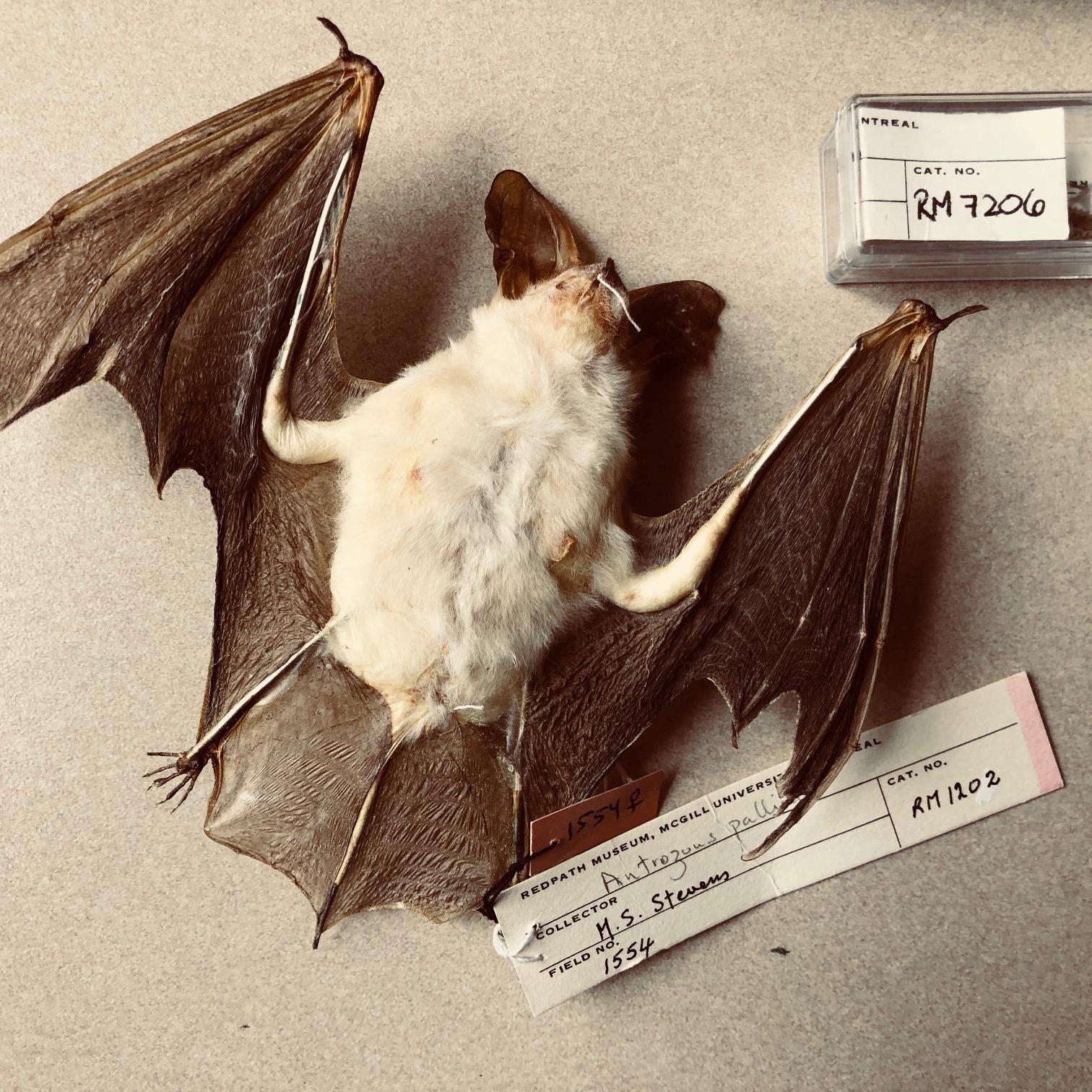 bat specimen.jpg