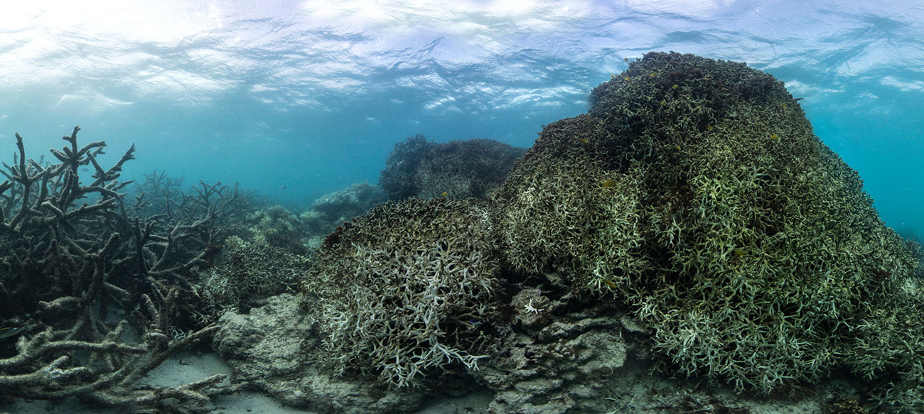 Coral on Lizard Island on Great Barrier Reef, May 2016. Photograph: The Ocean Agency