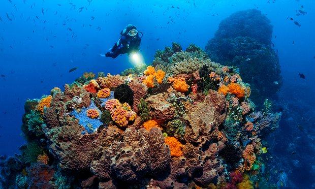 Healthy coral near Cairns. Photograph: Alamy