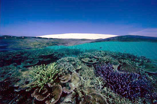 Sand and Cay Coral, Great Barrier Reef. Photograph: David Doubilet