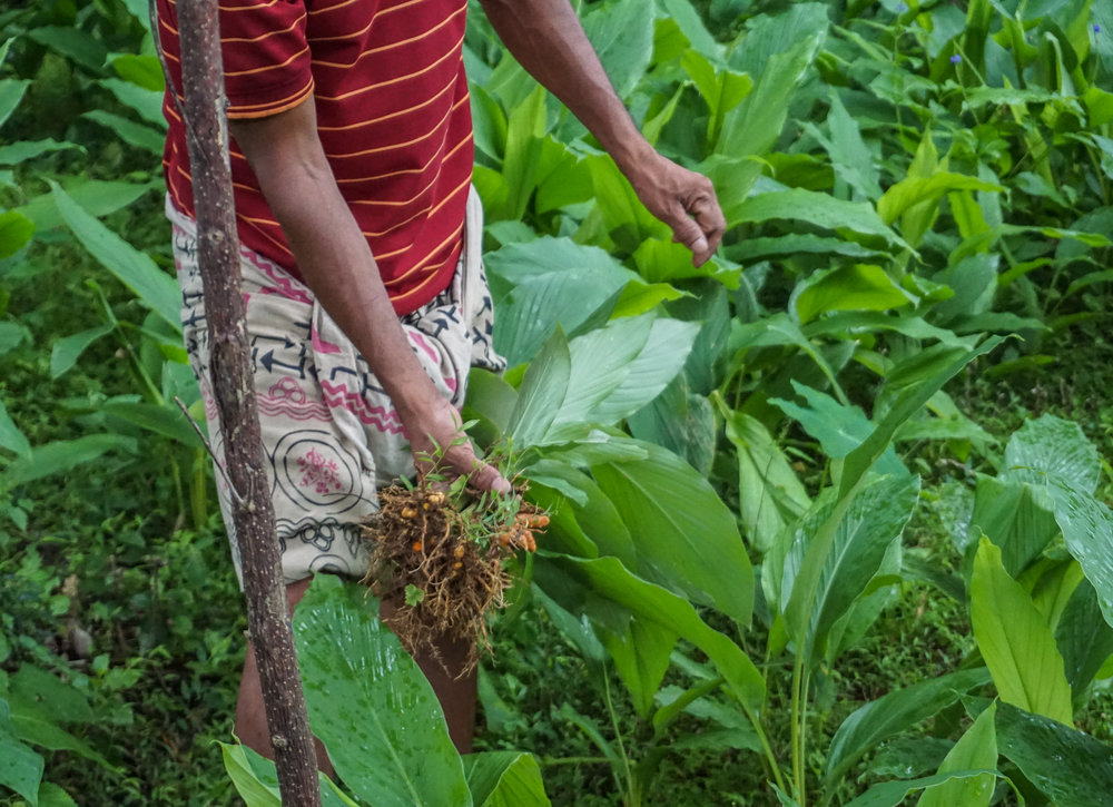 BACK TO THE ROOTS -SRI LANKA -