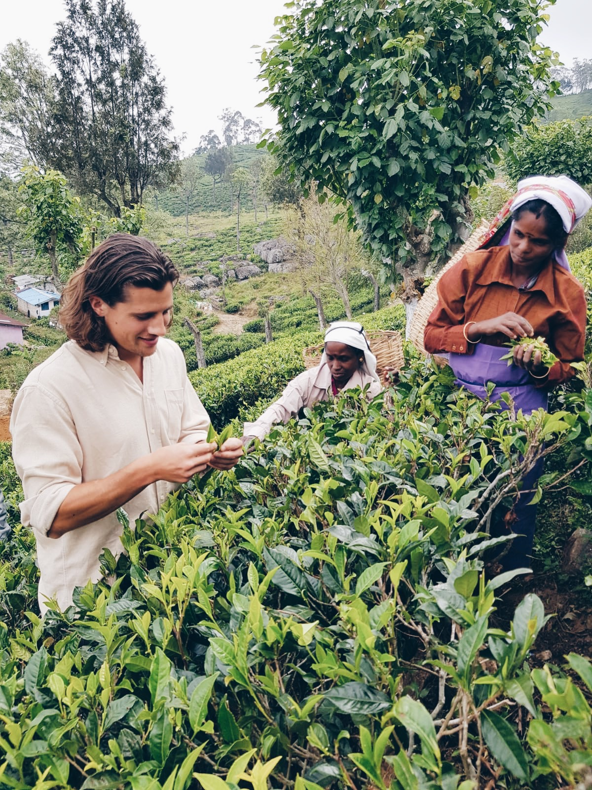 TEA FARM - The black tea in our delicious Turmeric Chai comes from high up in the lush, organic green hills of Haputale. It is always so lovely to meet the women that pluck the tea, a job that requires very petite fingers and attention to detail. Co-founder Tom had a go, but quickly learned how difficult it is to pick the best leaves.
