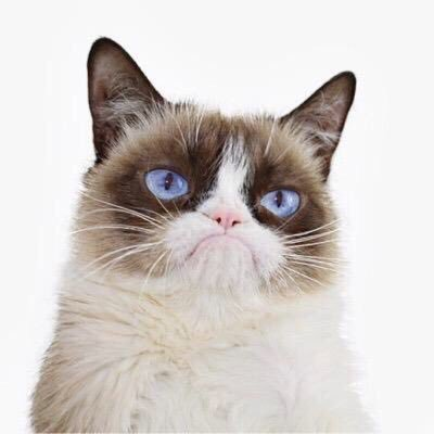 22. Grumpy Cat.jpg