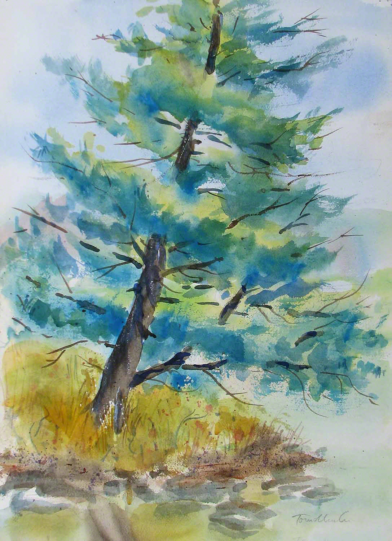 Tree at Hibiscus Pond