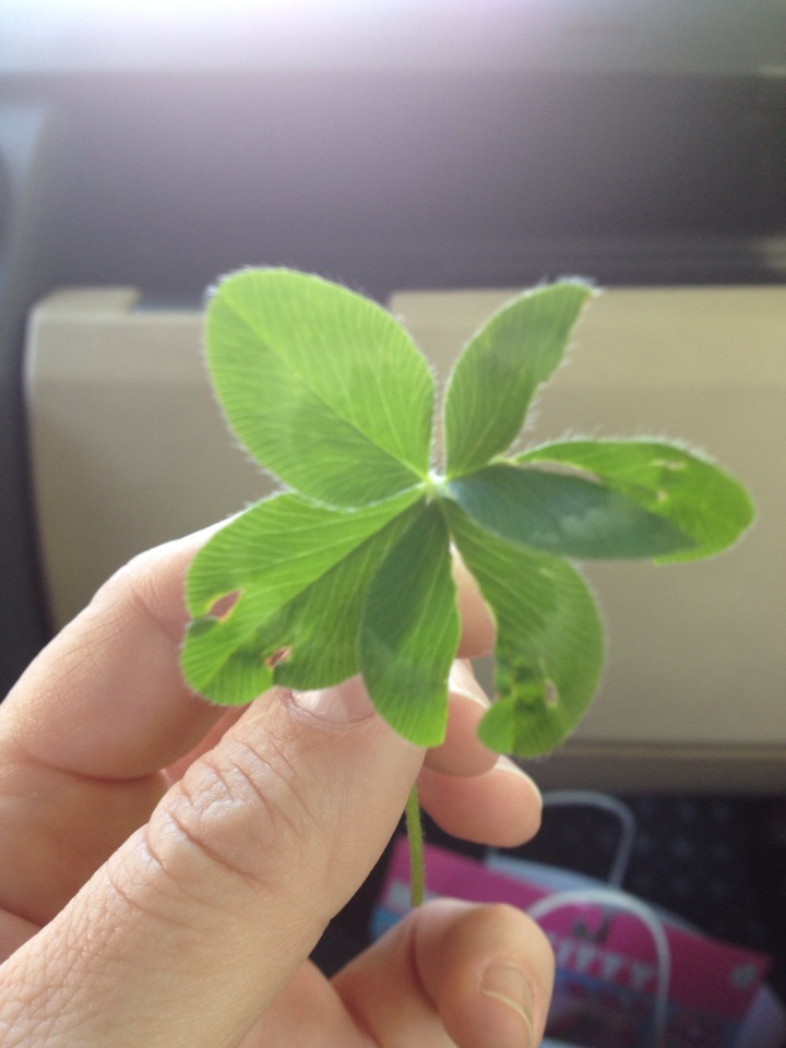 This one I found near a sidewalk where it just jumped out at me. Bam! It's a little beat up, but darn if it's not still a four-leaf clover.  (Note the X-Acto knife scars on my thumb. Ahhhh, the perils of the ad biz. No one can say I don't bleed for my craft.)