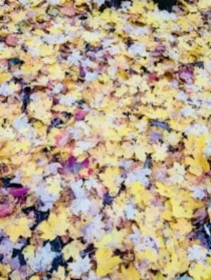Kuolleet lehdet2.jpg