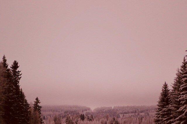 Metsä2.jpeg