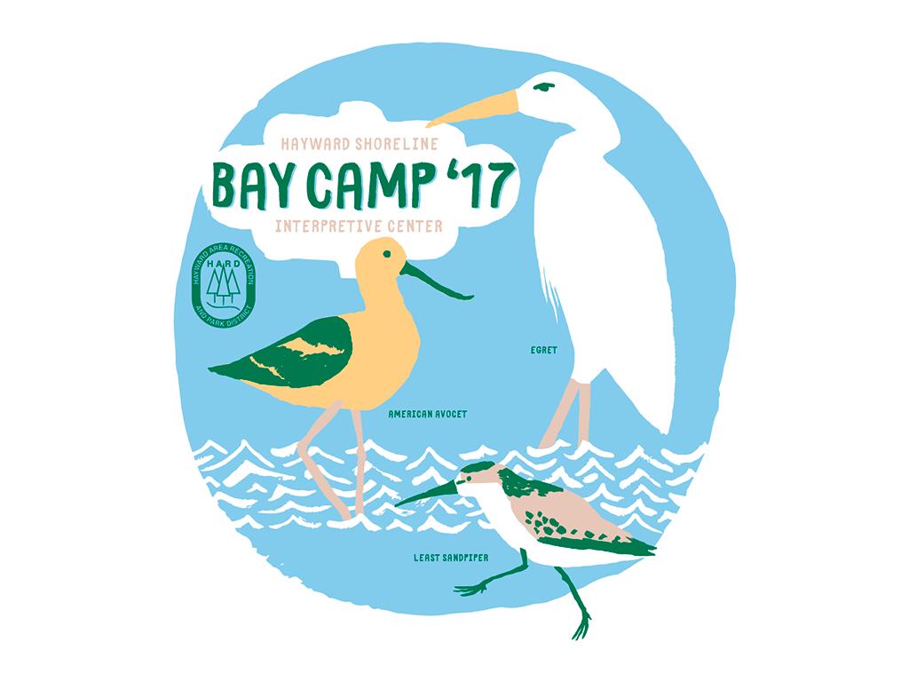 bay_camp_shorebirds.png