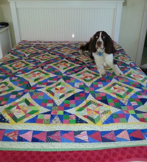 My Celtic Solstice quilt, with Taffy