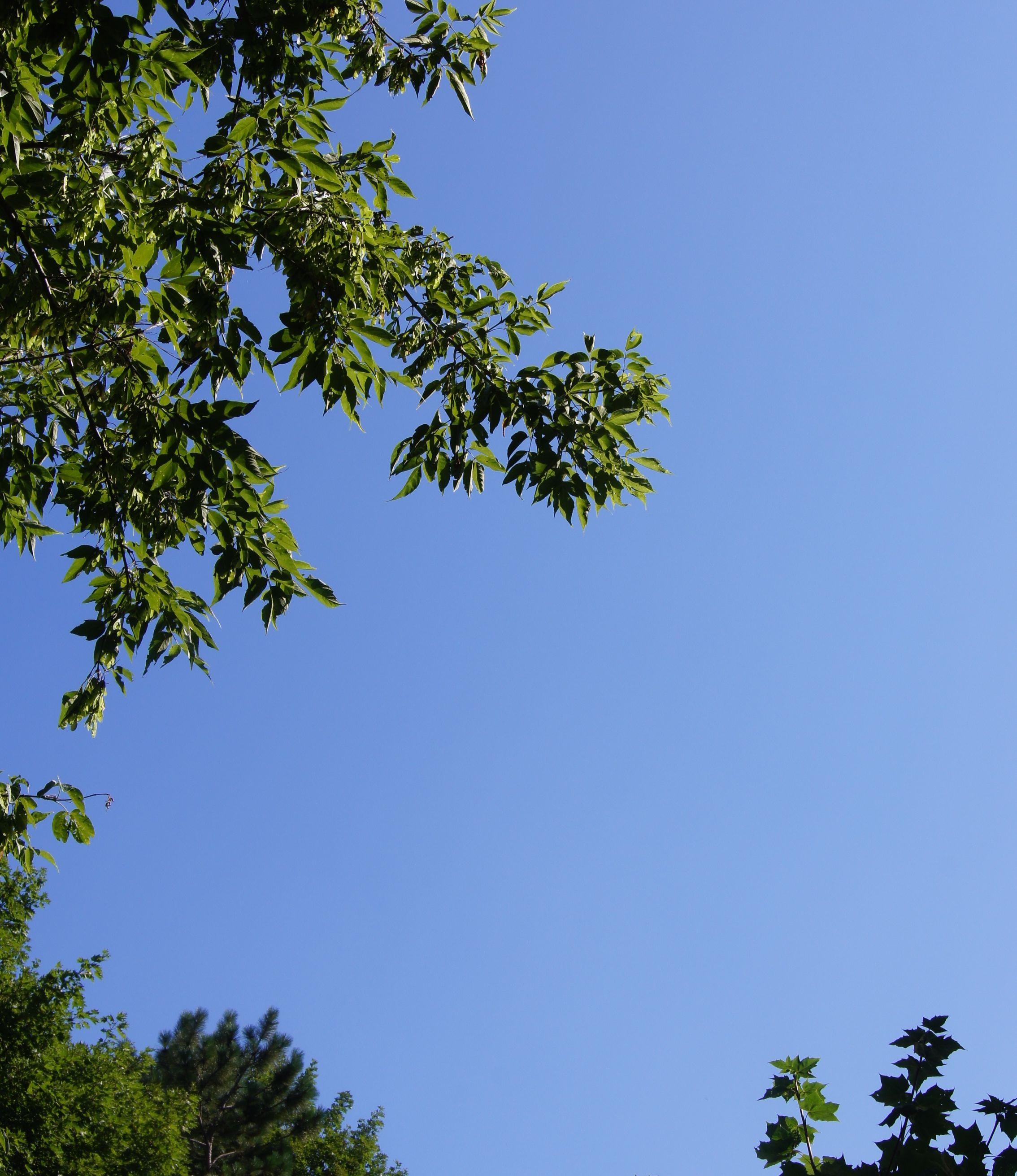 Sky blue on blue.jpg