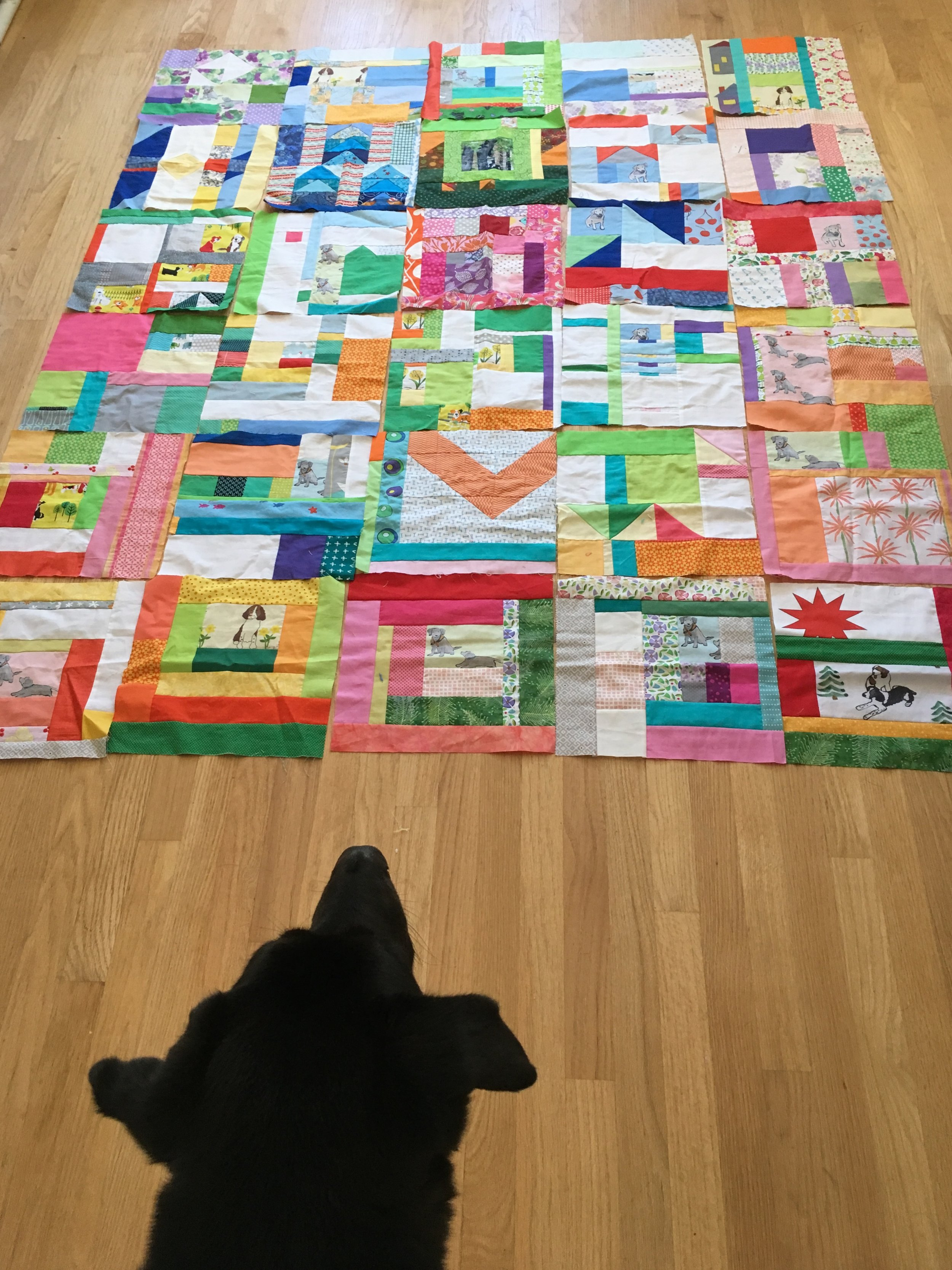 the 30 blocks of my Improv Scrappy Block Project 2017, with Hazel looking on
